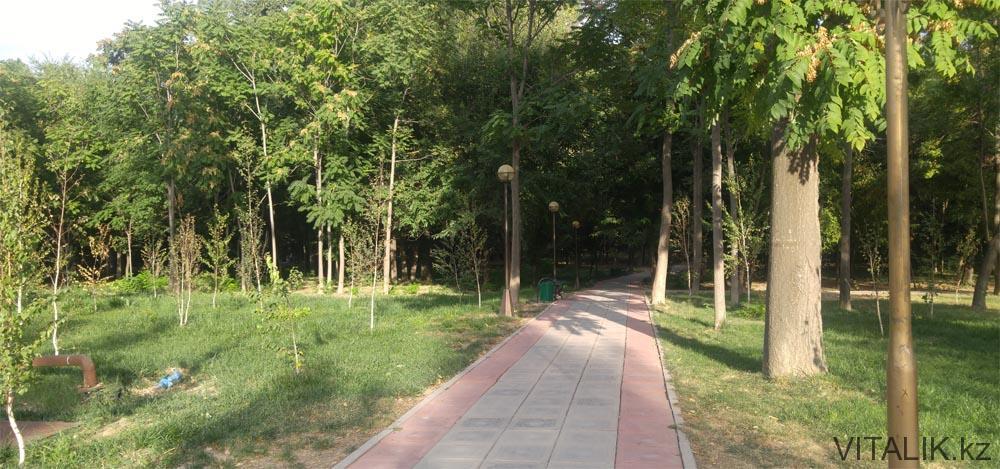 дендропарк деревья