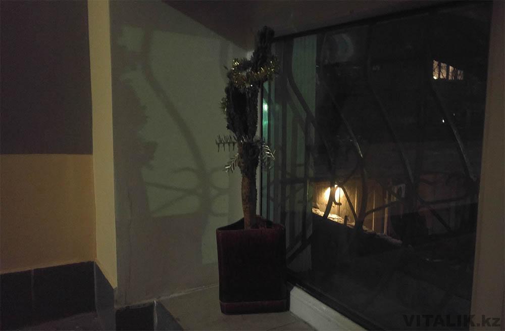 елка из кактуса