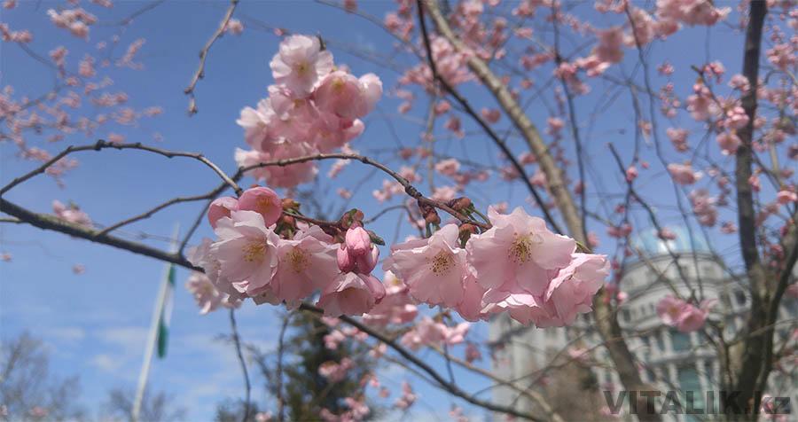 Душанбе цветы парк Рудаки
