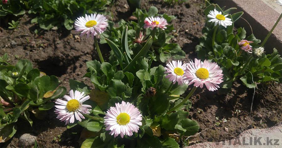 Цветы Душанбе март