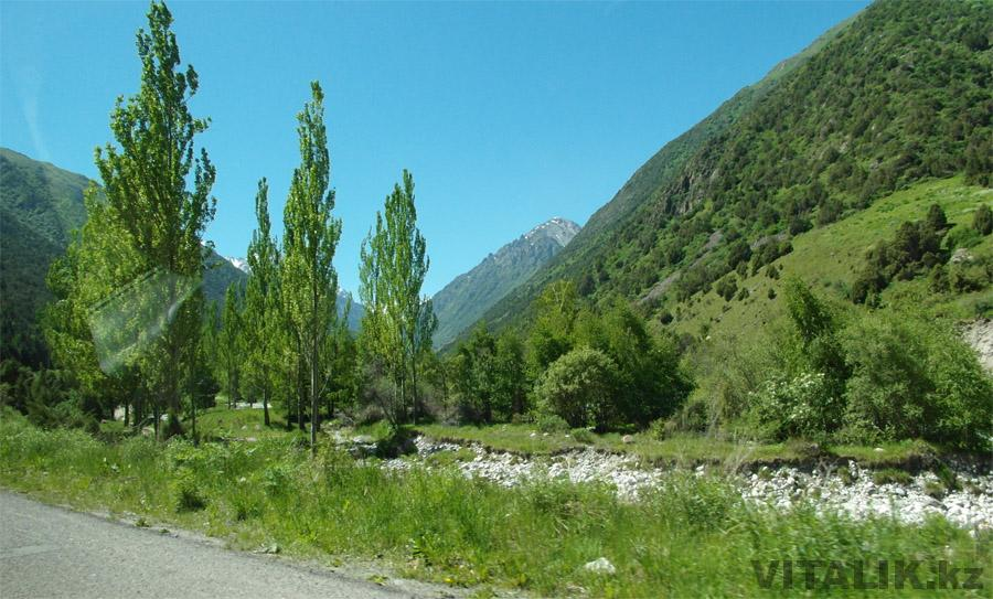 АлаАрча ущелье деревья