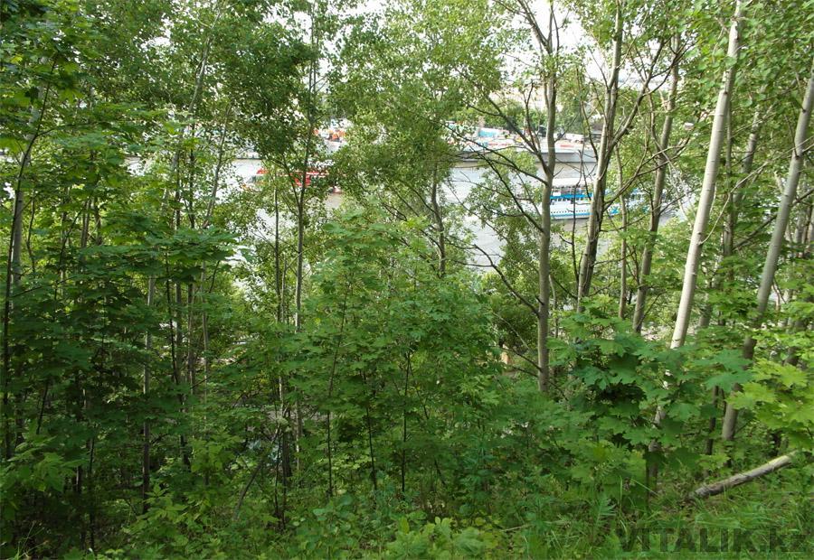 Воробьёвы горы лес Москва