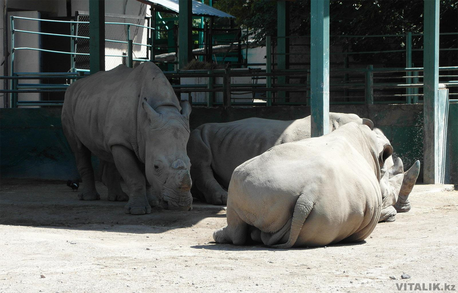 Зоопарк Алматы Хищники