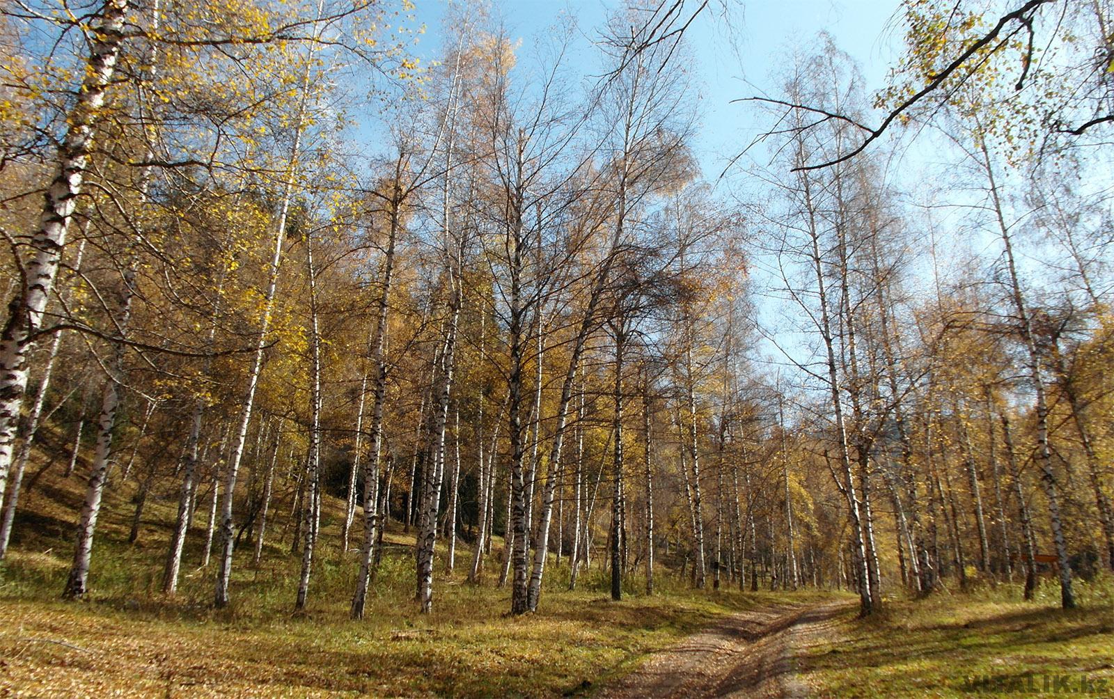 Маршрут от Медеу до Бутаковки пешком 2018